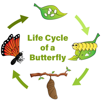 PLW_PSS_P2E4_Life-Cycle-of-a-Butterfly
